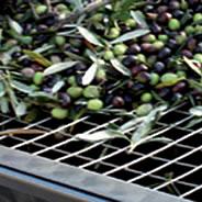 Rete per olive